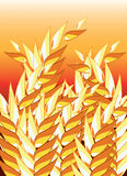 Wheat field. Abstract wheat field with red background Royalty Free Stock Photo