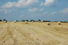 Wheat field 2. A yellow color wheat field with hay rolls royalty free stock images