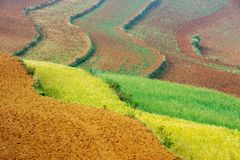 Wheat field. Landscape in Dongchuan district, Kunming city, Yunnan province of China Royalty Free Stock Photo