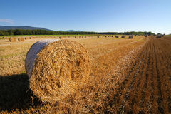 Wheat field. Harvested wheat field. Large bales of straw in the foreground. Clear skies Stock Images