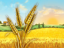Wheat field. Rural landscape showing a wheat field on a sunny day. Some wheat heads on foreground. Digital illustration Royalty Free Stock Images