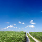 Wheat field. Path crossing through a wheat field Royalty Free Stock Image
