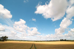 Wheat field. Stock Photos