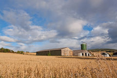 Wheat Field. A Wheat Field with Barns royalty free stock photo