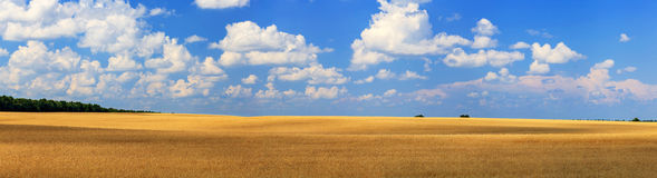 Free Wheat Field Stock Image - 32310181