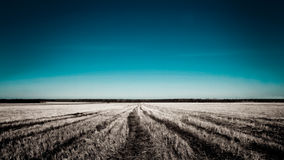 Free Wheat Field Stock Image - 3916691