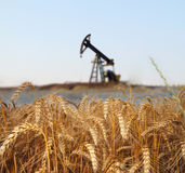 Wheat field. With oil pump on the background Royalty Free Stock Images