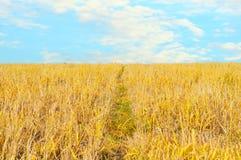 Free Wheat Field Stock Photography - 7201342