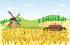 Wheat field. Landscape wheat field whith mill and house Royalty Free Stock Photo