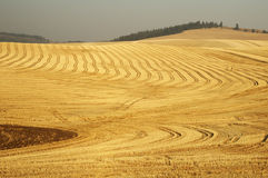 Wheat field 8. Patterns in a harvested wheat field in the Palouse area of southeastern Washington state Stock Image