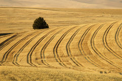 Wheat field 9. Patterns in a harvested wheat field in the Palouse area of southeastern Washington state Stock Images