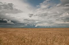 Wheat field ad clouds Stock Image