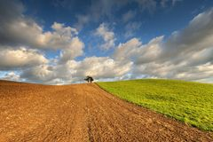 Wheat field against blue sky with white clouds. Agriculture scene Stock Photos