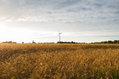 Wheat field, against the sky wind generator Stock Photos