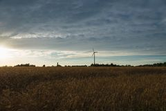 Wheat field, against the sky wind generator Royalty Free Stock Photography