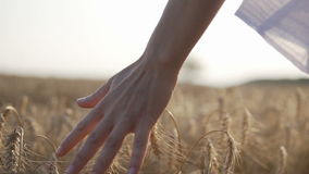 Wheat Field Against Sunset. Woman wearing white shirt runing through wheat field and touch ears by hand, sunset back shot, 120FPS slowmotion stock video footage