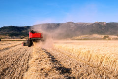 Wheat field in Apulia in a sunny day with a combine harvester in Stock Photo