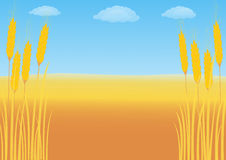 Wheat field on a background of blue sky. With cumulus clouds Royalty Free Stock Image
