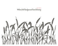 Wheat field background hand drawing. Vintage clip art isolated on white background Royalty Free Stock Photos