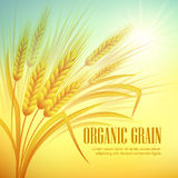 Wheat field  background. Vector illustration Stock Image
