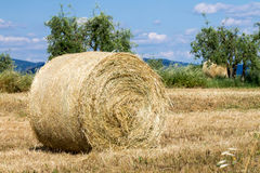 Wheat field with a bale of hay Royalty Free Stock Photography