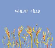 Wheat field banner at the autumn, Stock Images