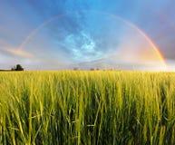 Wheat field - barley, Rainbow Royalty Free Stock Photo