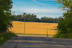 Wheat field behind highway lighted with evening sun Royalty Free Stock Image