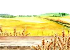 Wheat field with blank board. Summer rural landscape. Watercolor hand drawn illustration, background for your design. Wheat field with blank board. Summer rural Royalty Free Stock Images