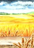 Wheat field with blank board. Summer rural landscape. Watercolor hand drawn vertical illustration, background for your design. Wheat field with blank board Stock Photography