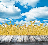 Wheat field and blue sky above wood floor Royalty Free Stock Images