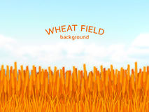 Wheat field and blue sky background Royalty Free Stock Photography