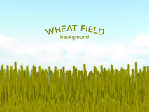 Wheat field and blue sky background. Colorful vector illustration Stock Images