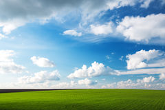 Wheat field and blue sky with clouds Stock Photo