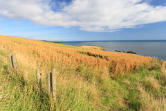 Wheat field and blue sky with clouds at shore line. Close to North sea, Aberdeen, Scotland, UK Royalty Free Stock Photography