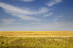 Wheat field with blue sky and clouds Stock Photography