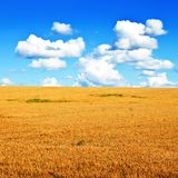 Wheat field and blue sky minimalistic landscape Royalty Free Stock Photo