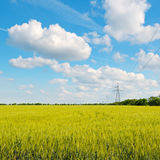 Wheat field and  blue sky Stock Image