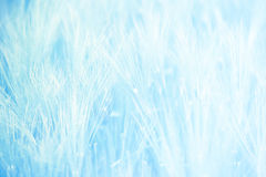 Wheat field in blue tones Stock Photography