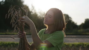 Wheat field in bright sun. stock video footage