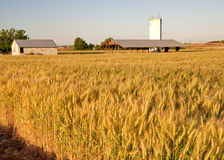 Wheat field and building Stock Images