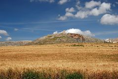 Wheat field and castle, Teba, Spain. Royalty Free Stock Images
