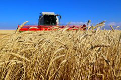 Wheat field. Close up on the background of the harvester Stock Photos
