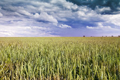 Wheat Field with Clouds on Blue Sky. Czech Republic, Europe stock images