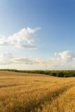 Wheat field and clouds. Summer landscape with wheat field and clouds Royalty Free Stock Image