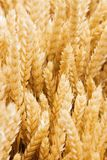 Wheat field, clouse up Stock Images