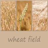 Wheat field collage. Different vieuw of Wheat field collage stock photography