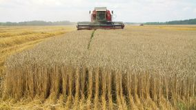 Wheat field with a combine harvester stock footage
