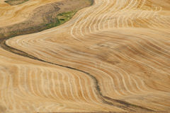 Wheat Field Contours, Palouse, Washington Royalty Free Stock Images