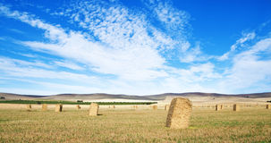 Wheat field in the country Stock Photo